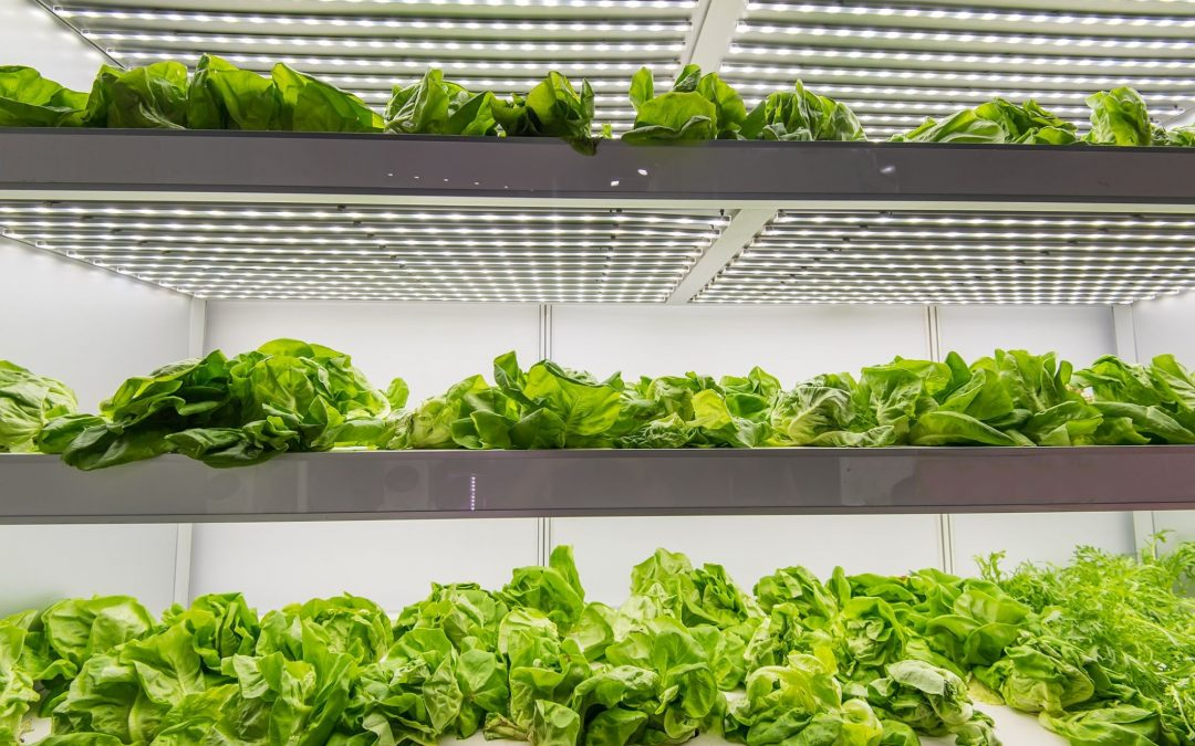Ultimate Guide to Choosing the Best HVAC Design-Build Contractor:  Meet Your Indoor Farm's Environmental Requirements & Maximize Production Yields
